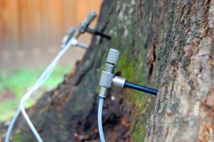pine bark beetle treatment